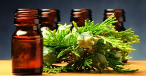 Cypress Essential Oil Uses To Try Out!