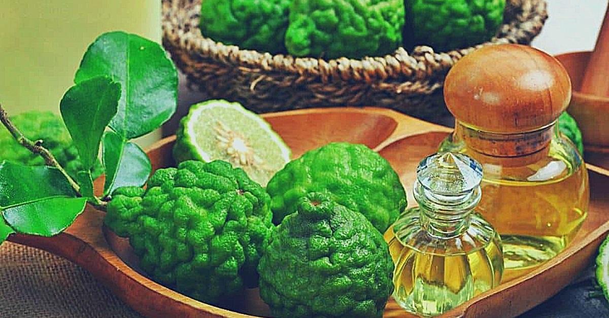 uses of bergamot