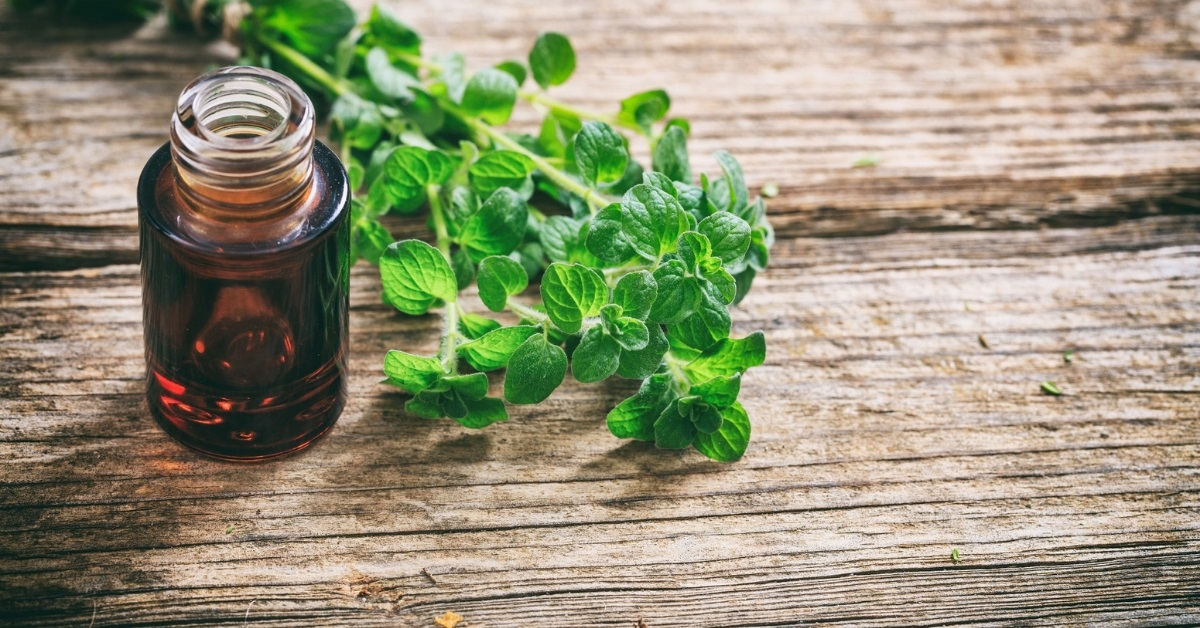 how to use oregano essential oil