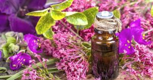 Clary Sage Essential Oil Uses (15 Best Ways To Use Explained)